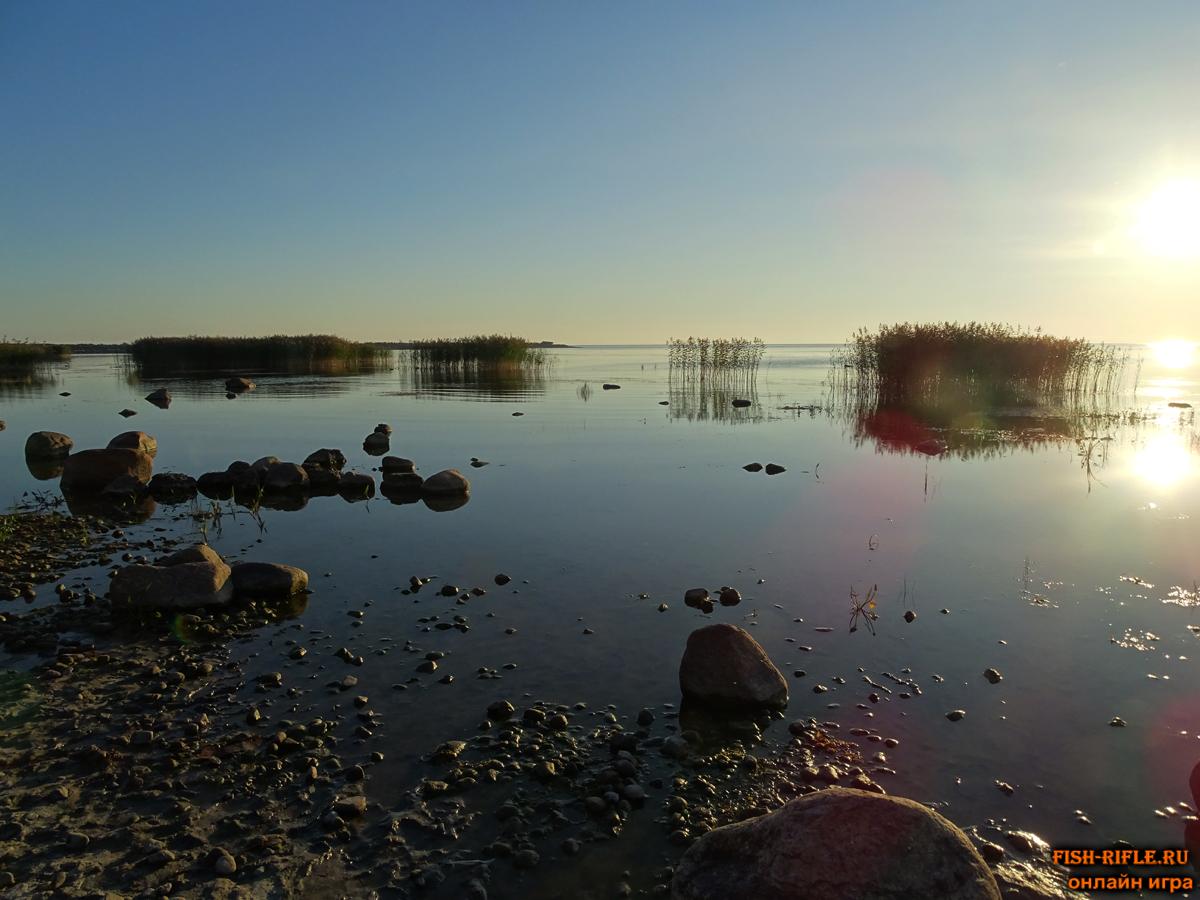 рыбалка фидером на озере видео