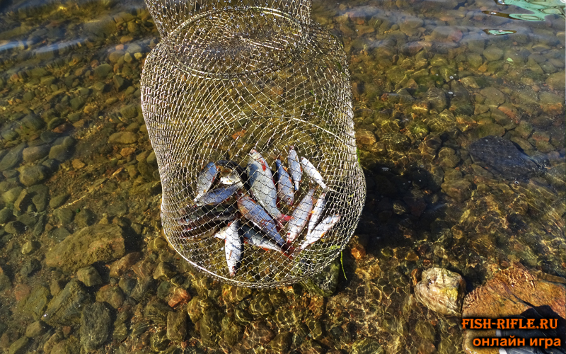 Ладожское озеро: Улов на одну удочку за час