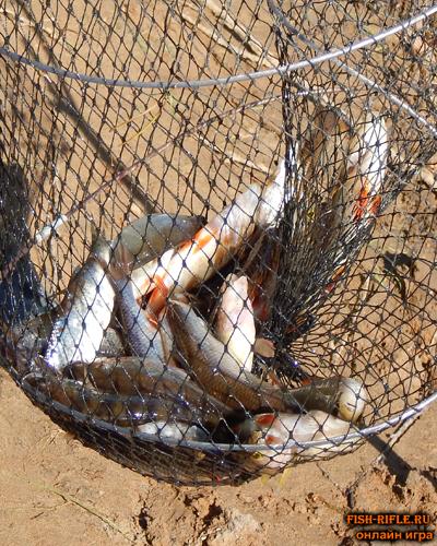 Как сохранить улов в жару?