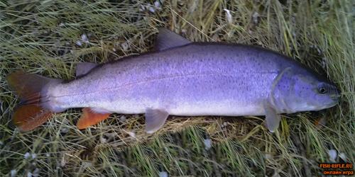 рыбалка озеро таватуй 2018