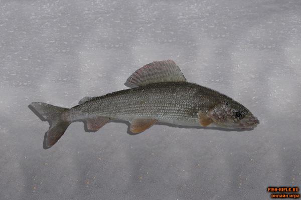 Рыбалка на реке Ингода